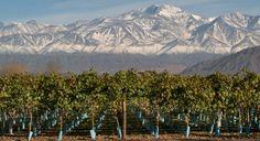 Conoce los #vinos de la bodega Las #Perdices (Agrelo - #Mendoza) en nuestra Web!