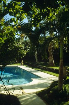 Lovely pool area with palms