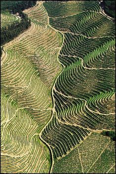 Amazing CURLY Vineyards of #Douro Valley Home of Port #Wine in #Portugal Feeling dizzy just looking at them...