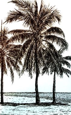 Realistic Drawings Pen and ink palm trees drawing. How to draw in realistic style with pen and pencil and what is the difference. What are the key factors for realism drawings. Tree Pencil Sketch, Palm Tree Sketch, Palm Tree Drawing, Realistic Pencil Drawings, Ink Pen Drawings, Cool Drawings, Beach Sketches, Tree Sketches, Realistic Rose