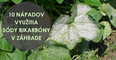 10 nápadov využitia sódy bikarbóny v záhrade, o ktorých ste možno nevedeli Beautiful Gardens, Plant Leaves, Remedies, Home And Garden, Good Things, Gardening, Vegetables, Diy, Amazing