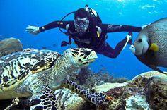 It is quite easy to fall in love with scuba diving and those who have done it more than once must have felt the need for more which is why you came across this article today. Considering the fact that you are looking to learn about the padi divemaster course Thailand has a lot to offer. So, having dived deep and under time and again, you have finally decided to take on your skills to the next level. http://www.idc-thediveacademysamui.com/divemaster-course-info.html