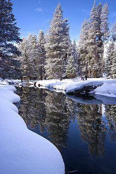 ❄️ Winter blue is magic❄️ Amazing reflection of the beautiful snow covered pine trees! Winter Photography, Nature Photography, Winter Wonderland, Winter Scenery, Winter Magic, Winter Snow, Snow Scenes, Winter Pictures, Winter Beauty