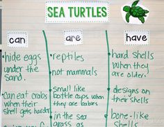 Sea turtle start in shells. When they get older they live in water. Mom turtles hide there eggs under the sand.  After reading the text, we create an anchor chart to help support our new learning.
