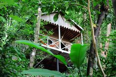 """Jungle Bay — Dominica Dominica didn't get the moniker """"The Nature Island"""" for nothing. The Caribbean's adventure capital is home to a number of small eco-lodges nestled in the trees, and none combines luxury, wellness and nature quite like Jungle Bay. Bungalow Hotel, Wellness, Plantation Homes, Island Beach, In The Tree, Go Green, Lodges, Vacation Spots, Beautiful Places"""