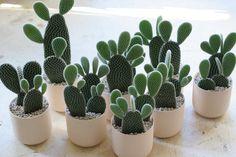 Succulents and Cactus: Photo Air Plants, Garden Plants, Indoor Plants, House Plants, Indoor Cactus, Cacti And Succulents, Planting Succulents, Planting Flowers, Bunny Ear Cactus