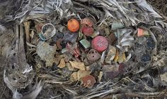 More than five TRILLION pieces of plastic litter our seas and oceans