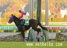 ネコパンチ|競走馬データ- netkeiba.com