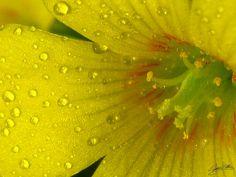 flower?