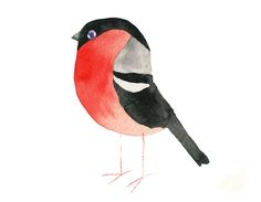 Matt Sewell,  British artist, Watercolour. His passion for bird-watching is right before our eyes. Put simply.