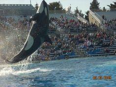 San Diego,ca  Sea world.  Go shamu!