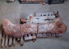 An as yet unnamed dinosaur, the world's largest, thus far, has been discovered in Argentina. During its lifetime, the new species of dinosaur is believed to have stood 65' (19.81 m) tall, was over 130' (39.62 m) long and weighed about 77 tons (155,000 lb - 70,306.81 kg). despite its enormous size, it is believed to have been an herbivore, roaming through the forests of the Cretaceous Period : 100 million years ago