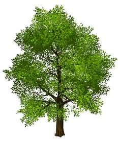 Transparent Green Tree PNG Picture
