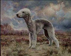 """A Scent of the Air"" Bedlington Terrier Limited Edition Limited Edition Print by Roger Inman"