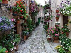 cobblstone street....beautiful flowers....cute little street in london...love it!