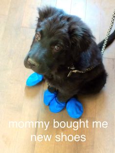 New Shoes, Pets, Stuff To Buy, Animals, Animals And Pets, Animales, Animaux, Animal, Animais