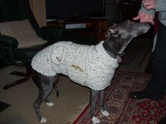 Whippet sweater- Cream whippet sweater - Whippet coat - Whippet clothing- Italian greyhound sweater *****THIS ITEM IS MADE TO ORDER****