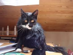 Titou Soaked After Shower.