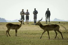 Extended Dash to the Bush Travel Package -- Walking Safari with Robin Pope Safaris -- Pukus