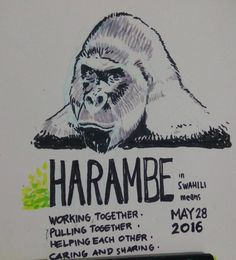 """""""Harambe is a Swahili name meaning working together pulling together helping…"""