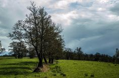 Good evening  ........ #rsnoekphotography ........ #nature #naturelovers #nature_perfection #follow #naturegram #landscapelover #landscapephotography #landscape #landscapes #cool #instacool #swag #love #fun #beauty #hot #instagood #photooftheday #beautiful #scenery #selfie #instagram #vsco #nofilter #sunset #sky #skylovers #natuur #instanature by rsnoekphotography