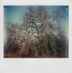 absorb by jauville, Polaroid Spectra System SE, Impossible PZ680 CPF #polaroid #impossible