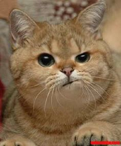 I love his grumpy expression on cat face! - http://cutecatshq.com/cats/i-love-his-grumpy-expression-on-cat-face-2/