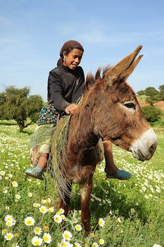 Africa: Berber girl and her donkey enjoying spring in the High Atlas Mountains, Morocco