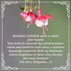 """Hayırlı Ramazanlar...  Rasûlullah (Sallallahü aleyhi ve sellem) şöyle buyurdu: """"Kim benim bir sünnetimi ihya ederek insanların onunla amel etmelerine vesile olursa, o insanların kazanacağı sevaplardan hiçbir şey eksiltmeden onların sevaplarının bir katını almış olacaktır. Beni seven benimledir."""" (İbn Mâce, Mukaddime, 15) #hadis #Peygamber #cicek #islam #ramazan #ramadan #yeniumitdergi"""