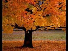 Pictures of autumn trees, leaves and colors with classical piano music.  Great for independent work time!