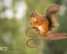 scissors at work by geertweggen. Please Like http://fb.me/go4photos and Follow @go4fotos Thank You. :-)