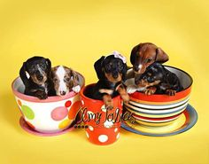From; I Love Dachshunds via Facebook