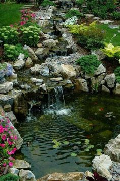 Lovely garden and pond