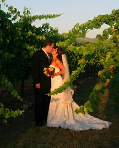 Sonoma wine country is one of the top two favorite wedding destinations and one of the top ten honeymoon ares of the USA. WeddingLinks.com provides hundreds of links to popular wine country wedding venues in California. Photo by DUPhotography.com