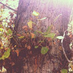 Podría ser Lothlorien #tree