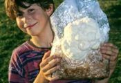 howtogrowmushrooms.org - A website showing how to grow mushrooms
