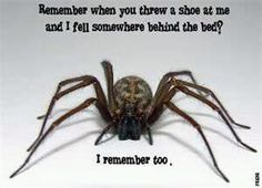 I think there's still a brown recluse under my bed, even though I killed & flushed it 8 months ago. Not cool.