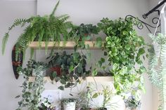 Green Obsessions: Barbara's plants