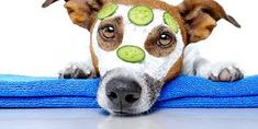 Dog Health And Wellness - Inside Out Dog Training You are in the right place about Pet Care Tips vet Dog Separation Anxiety, Dog Anxiety, Dog Grooming Salons, Grooming Dogs, Dog Shots, Pet Spa, Pet Health Insurance, Pet Care Tips, Service Dogs