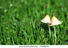 Mushroom pair by ByBethy, via ShutterStock Photo Editing, Stuffed Mushrooms, Royalty Free Stock Photos, Pairs, Pictures, Image, Editing Photos, Stuff Mushrooms, Photos