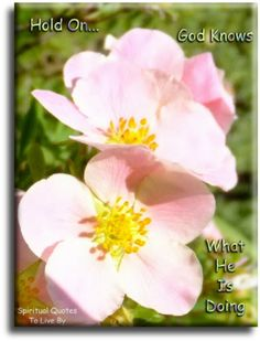 """""""Hold on, God knows what He is doing."""" Quote on photo of pink flowers. Spiritual Quotes To Live By"""