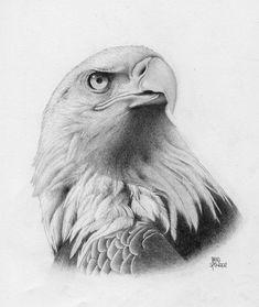 Pencil drawings of animals, bird drawings, animal sketches, realistic drawi Pencil Drawings Of Animals, Animal Sketches, Bird Drawings, Drawing Birds, Drawings Of Eagles, Drawing Drawing, Eagle Sketch, Bird Sketch, Adler Tattoo
