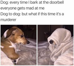 Best Dog Memes(Or Anything Else That Has Dogs 😉)