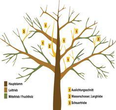 Raiffeisen Markt Ratgeber Obstbaumschnitt