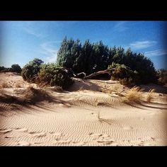 Le fantastiche dune di Chia - @igers_sardegna- #webstagram