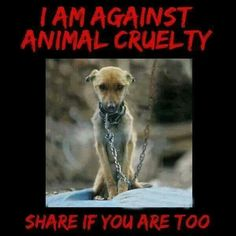 speaking out against animal cruelty pictures | Speak out against animal cruelty!!!!!