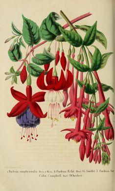 t.9 (1858-1859) - Belgique horticole. - Biodiversity Heritage Library