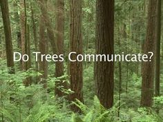 Trees Communicate With One Another, Connected by Fungi (Video). This is a very cool video!!! It reminds me of the movie Avatar, how the trees were a network and contained a system of transferring information of the moment and past. Very cool that science is finding these things to be true!