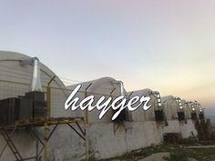 istiridye mantarı üretim çadırlarımız  www.hayger.com