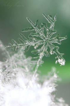 Snowflake #bokeh #photography